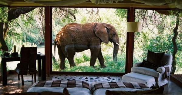Makanyane Safari Lodge, South Africa. A place where elephants walk outside the