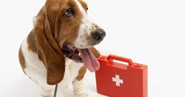 Dog First Aid Tips Dog Care Dog Items Dogs