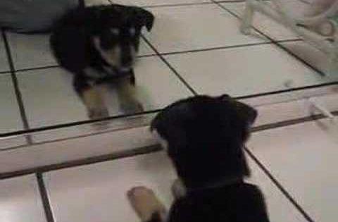 Puppy Meets Mirror Image Videos Animals Puppies Cute