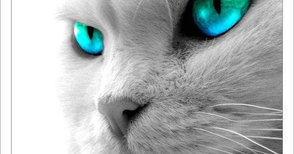 fond d 39 ecran yeux bleus verts regard pinterest yeux bleu vert yeux bleus et bleu vert. Black Bedroom Furniture Sets. Home Design Ideas