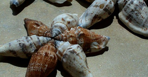 Seashell Stars Just Hot Glue Together By The Sea By