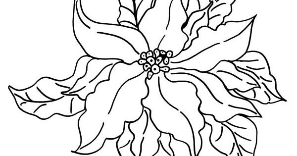 Images of Poinsettia Coloring Pages