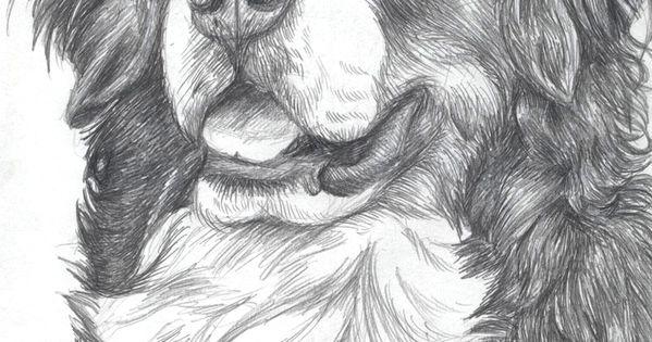 Bernese Mountain Dog By Demodog On Deviantart Dogs Art