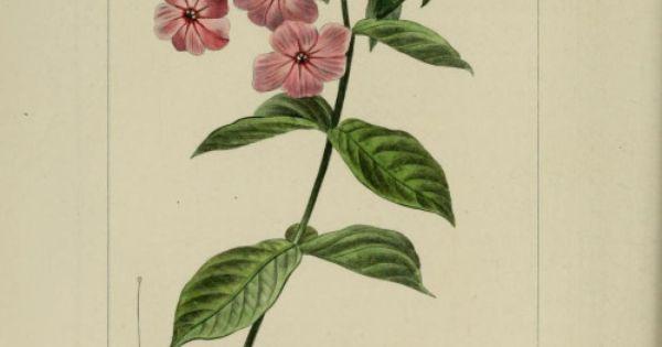 plate from herbier delamateur de fleurs by m drapiez published 1829 by v p j de matnatural history museum library london biodiversi pinteres