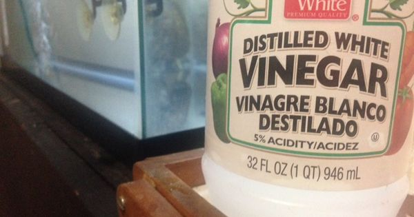 Remedy home cleaning tip clean your turtle tank with for Cleaning fish tank with vinegar