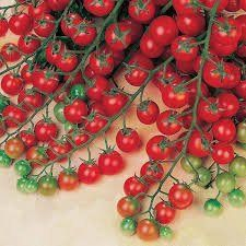 Tomatoes 101 A Quick Start Guide For Beginners Empress Of Dirt Tomatoes Plants Problems Cherry Tomato Plant Tomato Plant Care