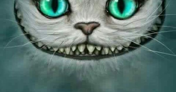 Fondos-de-gatos