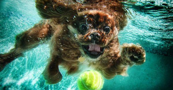 Seth Casteel underwater dog photography
