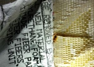 Bed Bugs Pictures Termite Control Termite Pest Control Pest Control