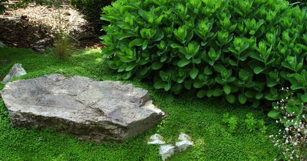 Stepables Com Plants That Tolerate Foot Traffic Ground Cover Ground Cover Plants Plants