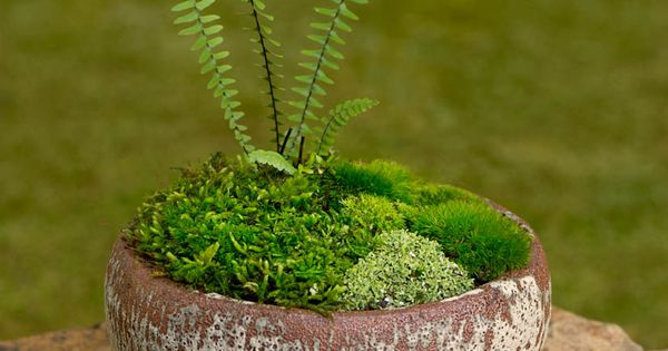 This website has the most beautiful moss and stone gardens! For a