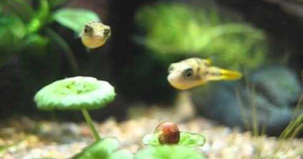 Pin On Home Aquarium