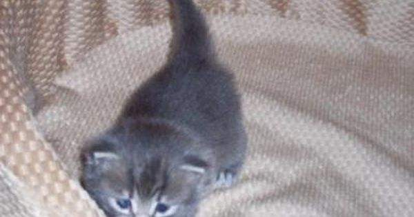 6 Week Old Kitten Won T Use Litter Box 6 Week Old Kitten Cat Lovers Kitten
