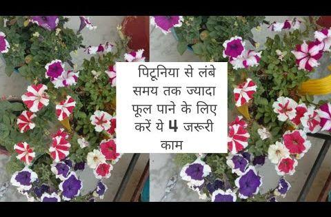 प ट न य पर कर 4 जर र क म और प ए ल ब समय तक ज य द फ ल Anvesha S Creativity Youtube In 2020 Flowers Light Box Lettering