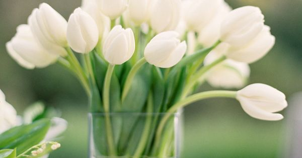 A simple and clean white tulip centerpiece. Beautiful for a spring wedding!