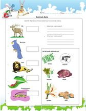 1st Grade Science Worksheets For Kids Pdf With Images Science