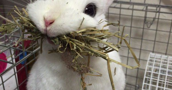 derpy bunny 02 | Bunnies! | Pinterest | Mom, A bunny and ...