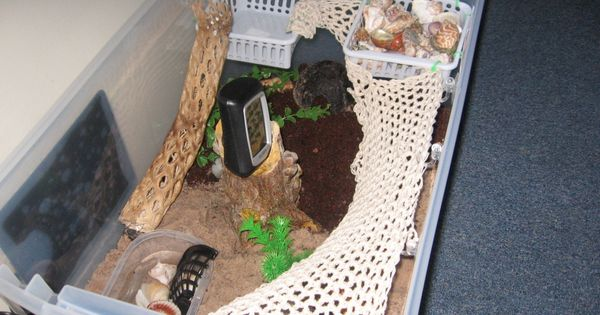 DIY Hermit Crab Habitat. I think I might get one...