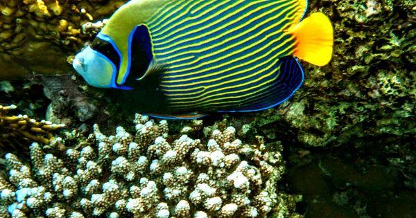 Pin By Johnnie M Jamaica On Underwater Angel Fish Fish Animals