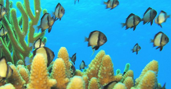 The most beautiful coral reefs in the world - Chit chat ...  The most beauti...