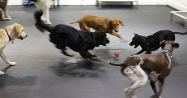 Dog Daycare Nyc Doggy Day Care Nyc Dog Day Care New York Ny Dog Daycare Asian Dogs Sick Dog