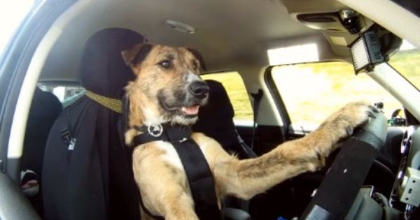 Driving Dogs Ad Campaign Drives Up Adoption Of Shelter Dogs In New Zealand Video Dogs Dog Meet Your Dog