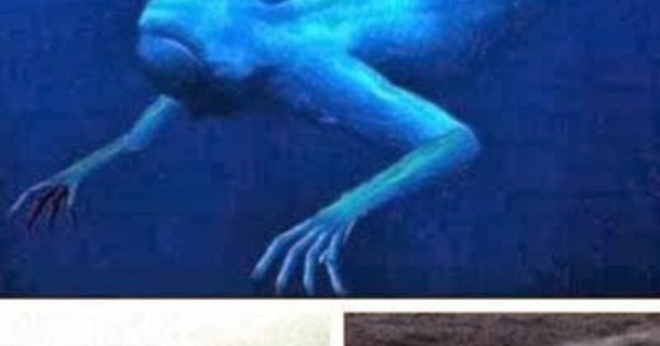 Real Mermaid found in Japan, it's really an amazing sea ...