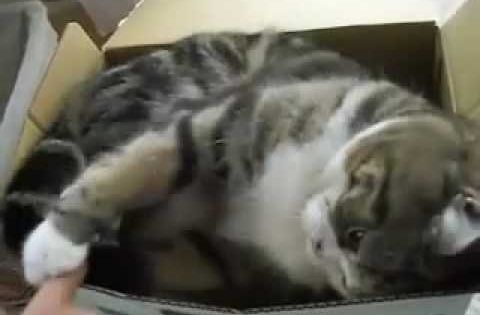 Yep, funny cat videos win the internet. Near the end when he