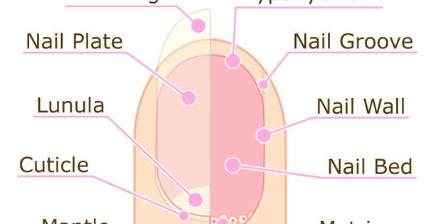 Nail Diagram - Bing Images | Biology | Pinterest | Cosmetology