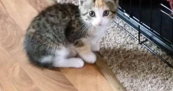 Adopt Annie Mae On Domestic Short Hair Short Hair Cats Pets