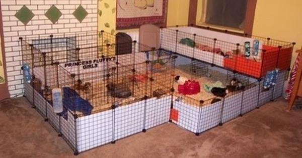 Cavy cage guinea pig stuff pinterest guinea pigs for Diy playpen for guinea pigs