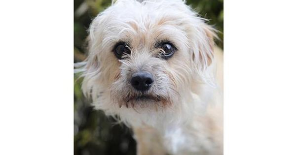 Adopt Twinkie On Petfinder Dog Adoption Help Homeless Pets Homeless Pets