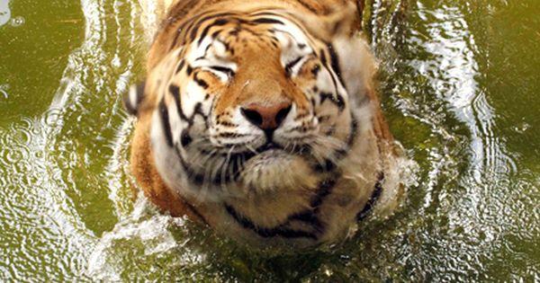 :) Geaux Tigers