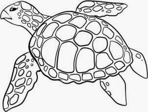 Resultado De Imagem Para Tartaruga Marinha Desenho Pintura De