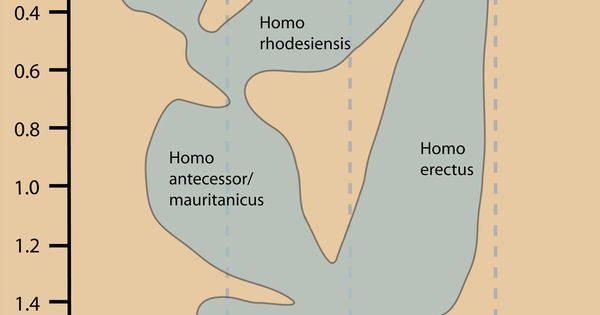 Home bases and Early hominids Essay