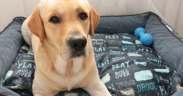 P L A Y Pet Lifestyle And You Dog S Life Lounge Bed In Sofa Blue And Ash Gray Dog Bed Comfy Labrador Dogs Blue Sofa Your Dog