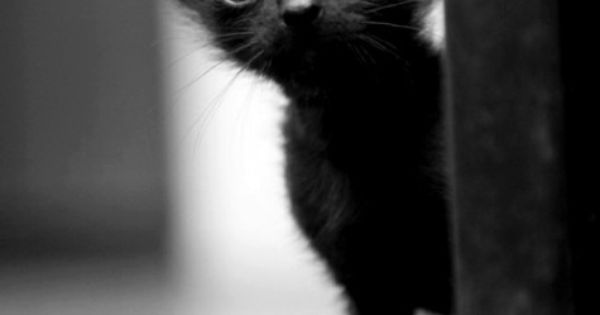 Never hesitate to adopt a black cat! They are the least adopted