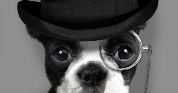 top hat and tails dog tophat