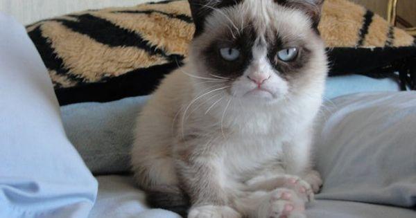 Grumpy cat, grumpy cat meme, grumpy cat humor, grumpy cat quotes, grumpy