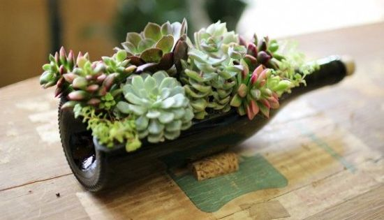 Wine bottle succulent planter easy diy video tutorial for How to cut glass bottles lengthwise
