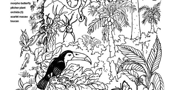 animal habitat coloring pages Google Search 1st Grade