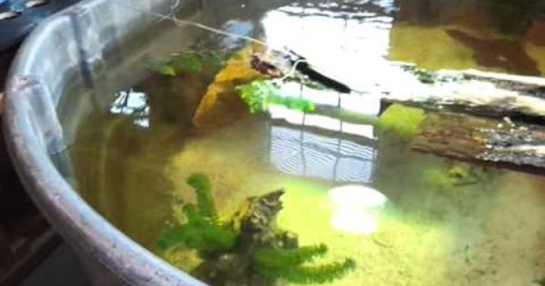 15 How To 300 Gallon Rubbermaid Stocktank Turtles Setup Turtle Pond Turtle Habitat Aquatic Turtle Habitat