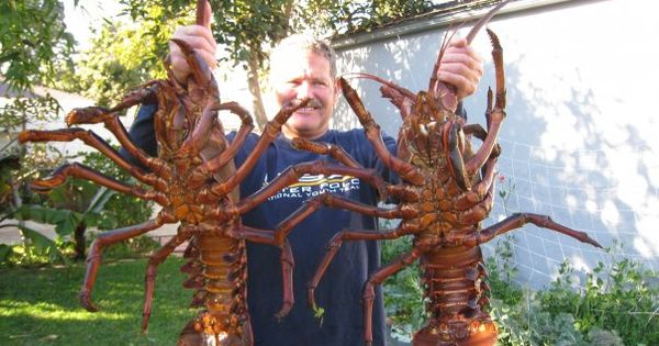 World Record Lobster 44.5 Pounds | Record Lobster | Materialize my pins on my boards to me now ...