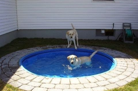 Could be a firepit in the winter-Dog Pond - Place a plastic kiddie pool in the ground. It'd be easy to clean and looks nicer than having it above ground. Big dogs can't chew it up or drag it around. Could work for kids too!