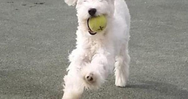 Dogs Adoption Dog Love Pup