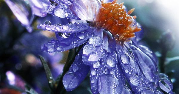 Waterdrops Purple