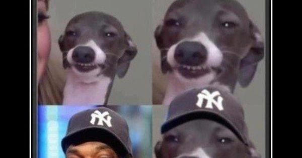 @Jenna_Marbles Kermit Snoop Dogg -- love this | Pitbulls ...