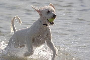 Fetch Because Apparently He Doesn T Know He S Supposed To