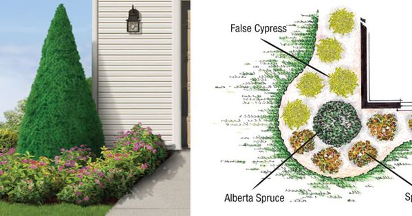 House corner tree evergreen google search plants and for Accent tree for corner of house