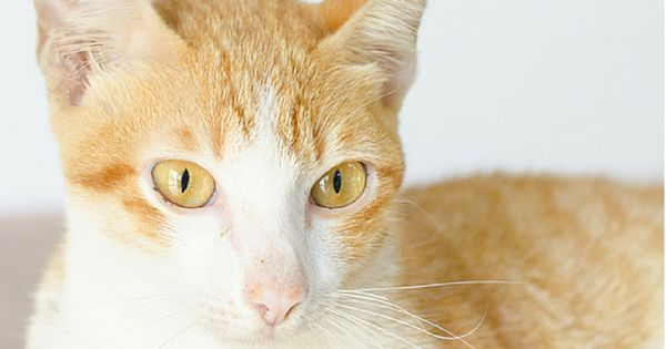 Bladder Stones In Cats Natural Treatment